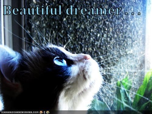 animals cat beautiful caption dreamer - 8768415488