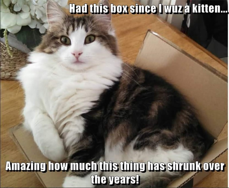 animals box caption Cats - 8768496640