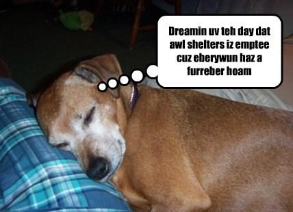Teddy's Dream