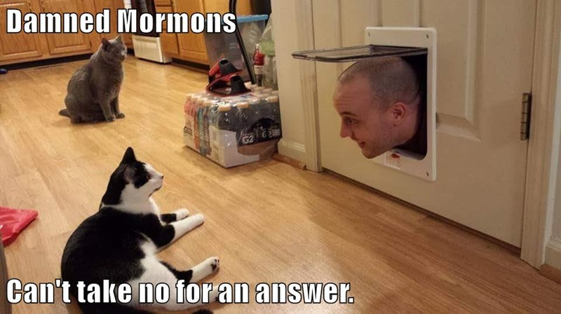 animals answer take mormons caption no Cats - 8768551936