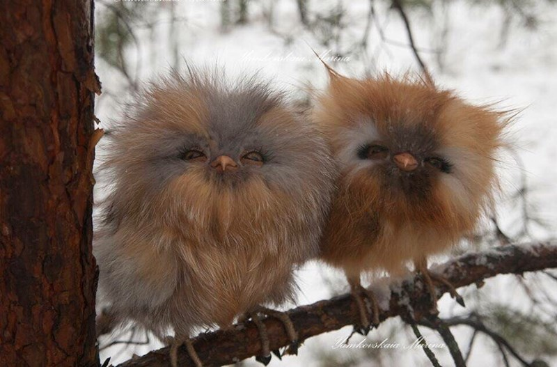 wait furbys are real
