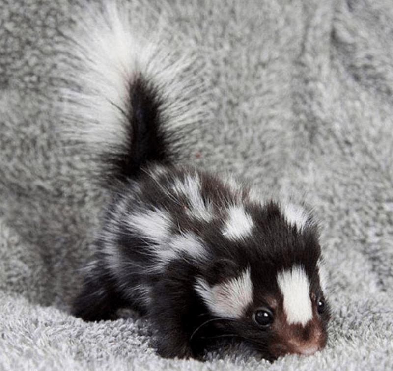what a cute little stinker