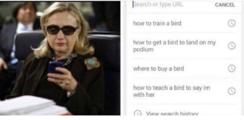 image bird hillary clinton Hillary's Incriminating Web Search