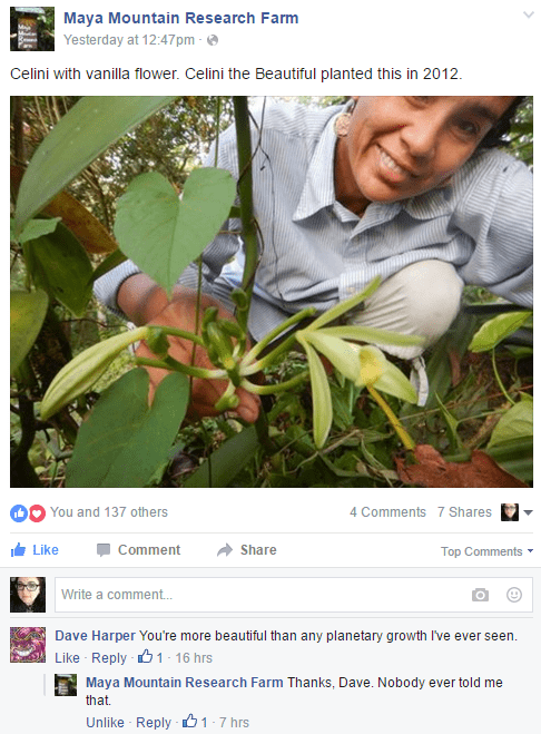 Focus on the plant, Dave.