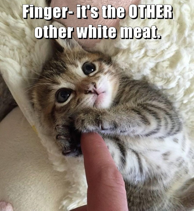 Finger- it's the OTHER other white meat.