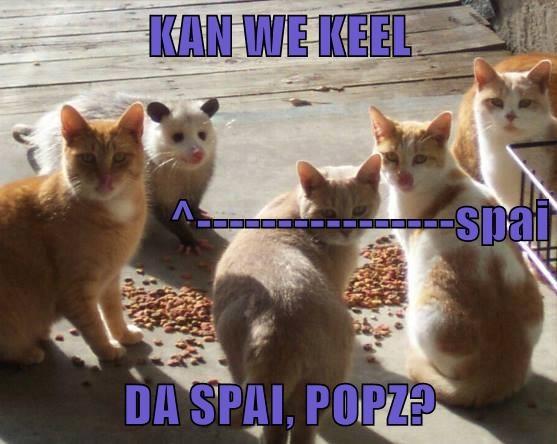 animals - 8768687616