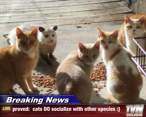 Breaking News - proved:  cats DO socialize with other species :}