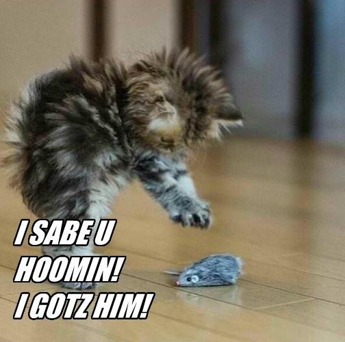 My Kitty Is My Hero!