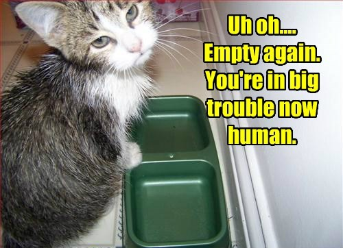 Uh oh.... Empty again. You're in big trouble now human.