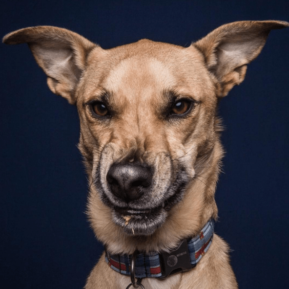 dogs,photography,peanut butter