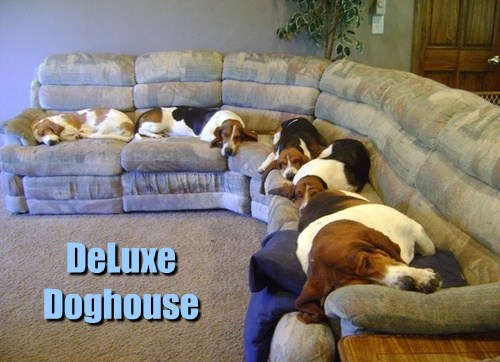 dogs couch doghouse caption sleeping hounds - 8769580288