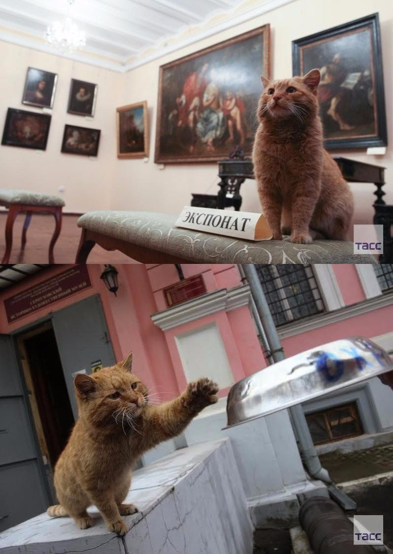 cat works at museum in russia
