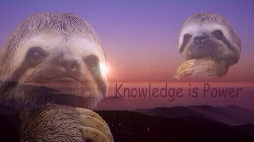 sloth knowledge poster Never Stop Studying