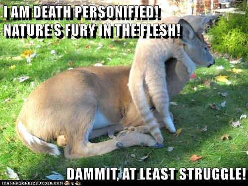 animals cat struggle Death deer caption personified - 8769630208