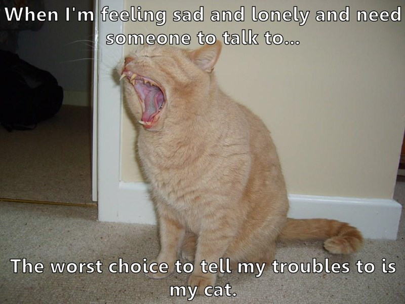 When I'm feeling sad and lonely and need someone to talk to...  The worst choice to tell my troubles to is my cat.
