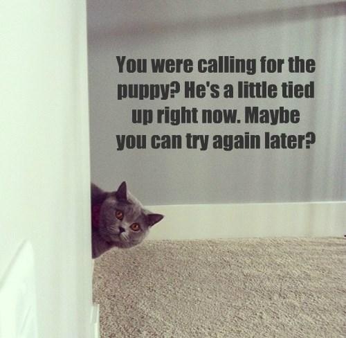 cat puppy caption - 8770071296
