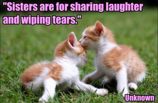 sharing laughter kitten tears - 8770582784