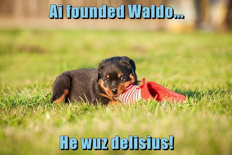animals caption dogs waldo - 8770943744