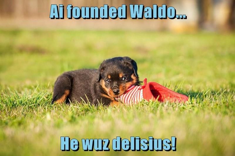 animals caption dogs waldo - 8770943744