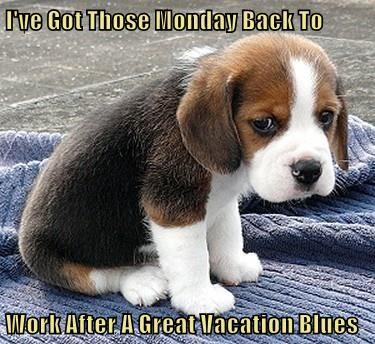 animals puppy work blues caption monday vacation - 8770945792