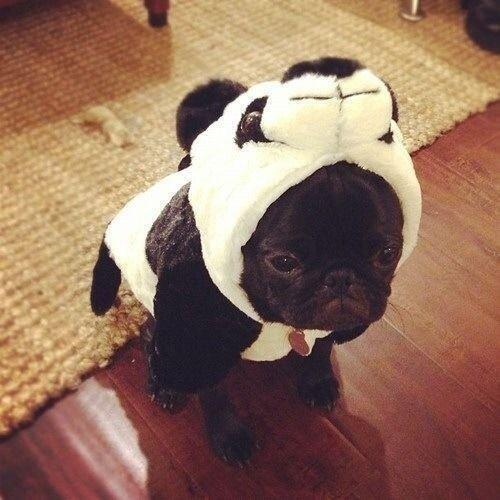 dog in a panda costume