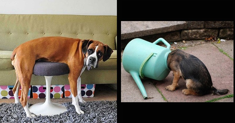 Funny pictures of dogs getting stuck in things