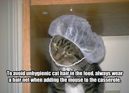 cooking,caption,Cats,hair net