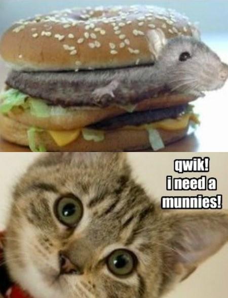 munnies hamster caption Cats burgers - 8771262208