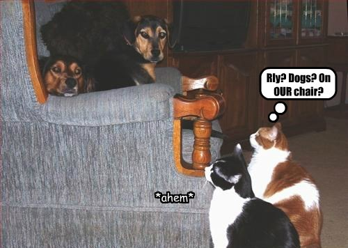 chair,our,dogs,caption,Cats