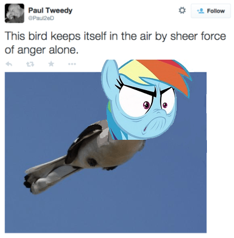 tanks for the memories ponify rainbow dash - 8771307008