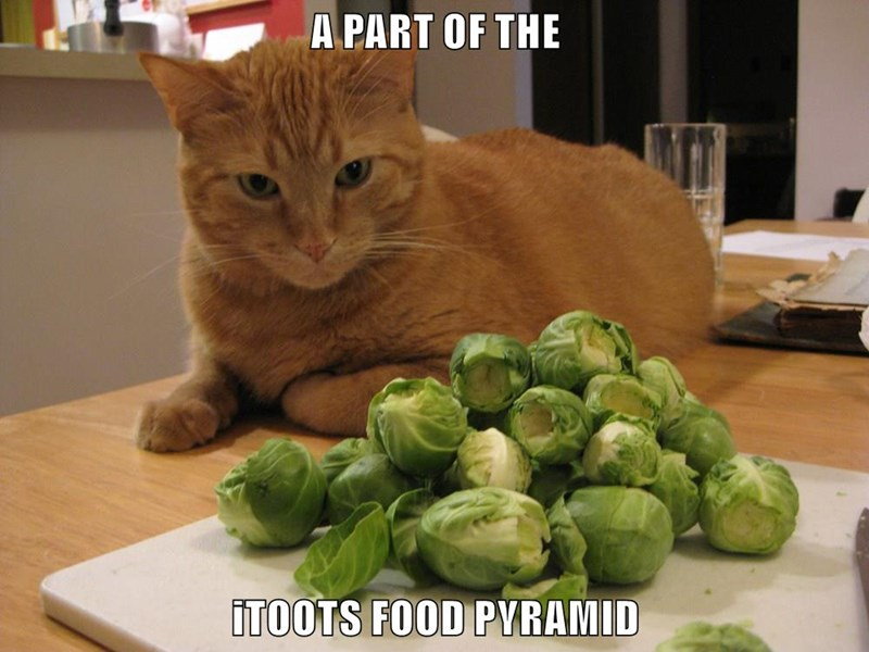 animals food caption Cats - 8771331328