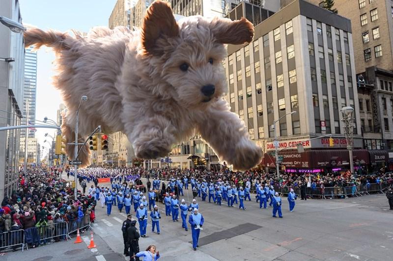 Dog breed - DIA ND CE DIA OND CENTER DIAMONDS ZOLAND DIAMOND CITY SE OOVX DS