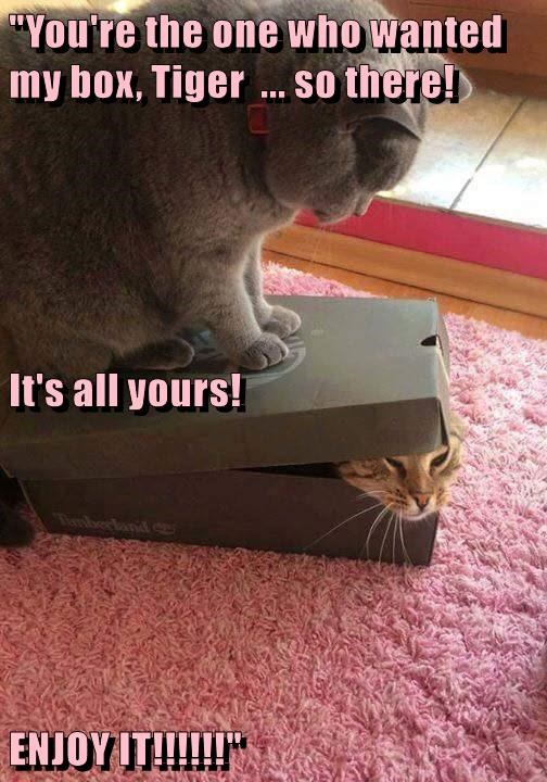 all yours wanted cat box caption - 8771425792