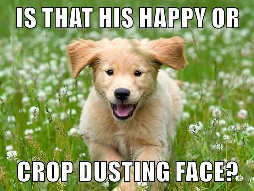 animals dogs dusting happy caption crop - 8771570688