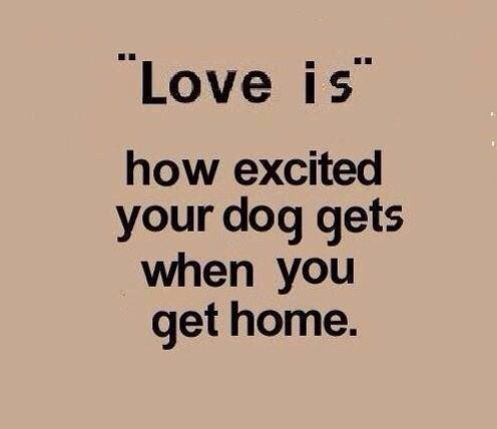 love is how excited your dog is to see you