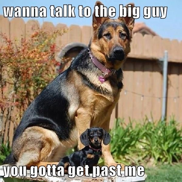 animals dogs talk big guy caption