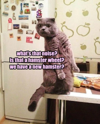 Cats caption hamster noise - 8771937280