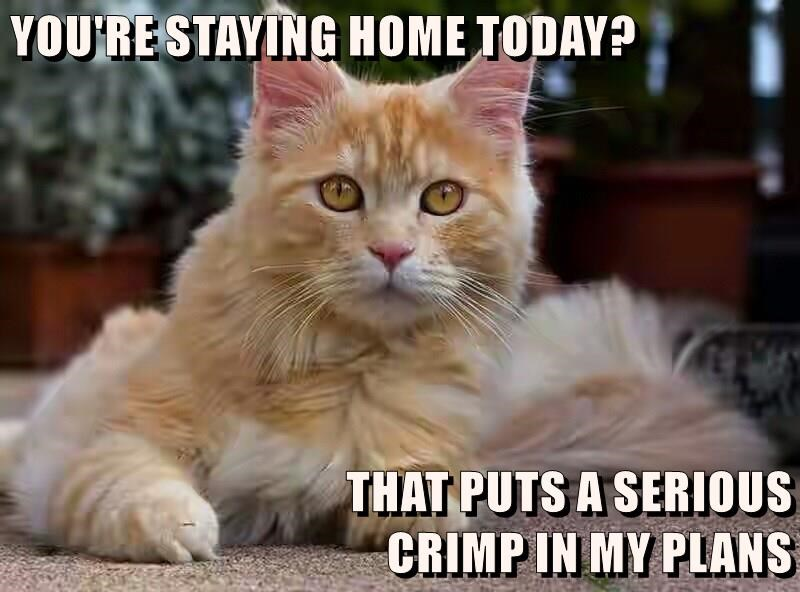 YOU'RE STAYING HOME TODAY?  THAT PUTS A SERIOUS                                                                 CRIMP IN MY PLANS
