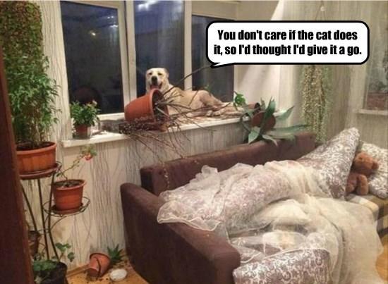 dogs plants caption - 8771982592