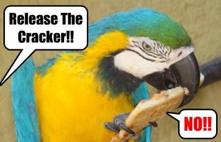 birds Memes caption parrot - 8772049152