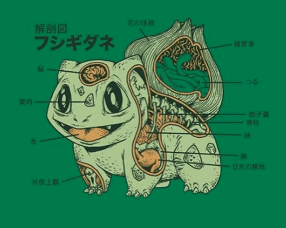 Bulbasaur Anatomy Pic Might Be Even Better Than Pikachu's!