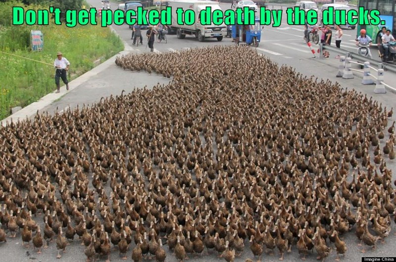 Don't get pecked to death by the ducks.