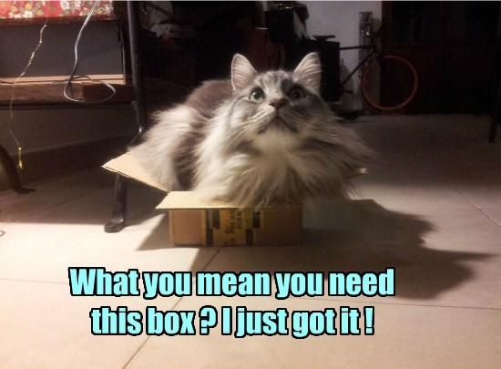 box caption Cats - 8772584960