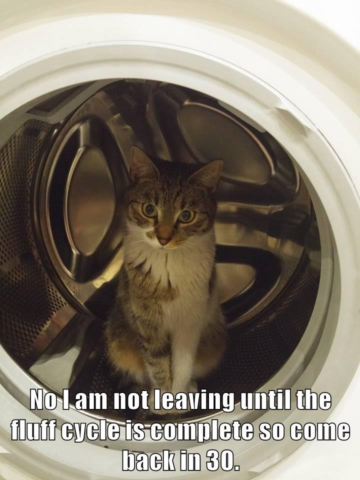 animals dryer fluff caption Cats - 8772587776