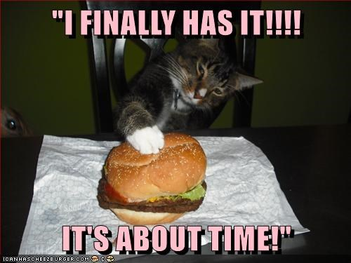 animals cheeseburger caption Cats - 8772600832