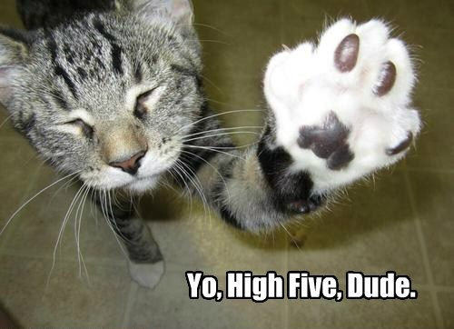 high five,caption,Cats