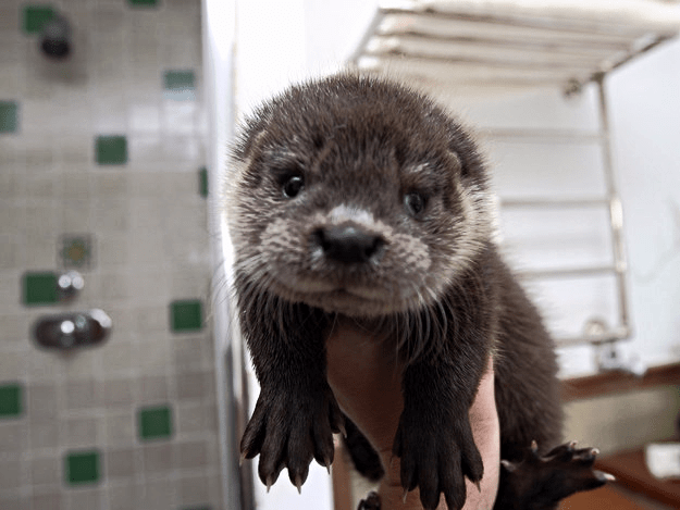 this baby is otterly adorable