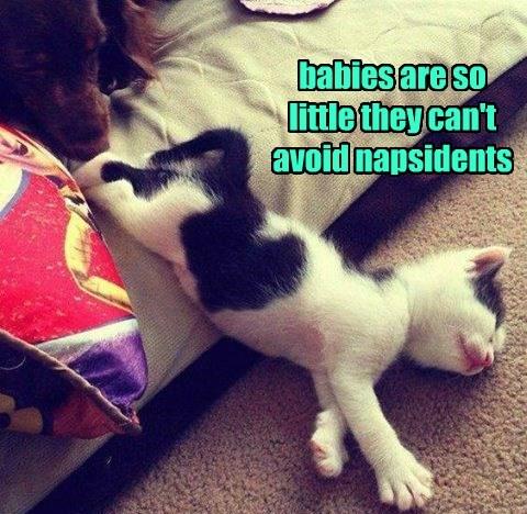 nap,accident,kitten,caption,little