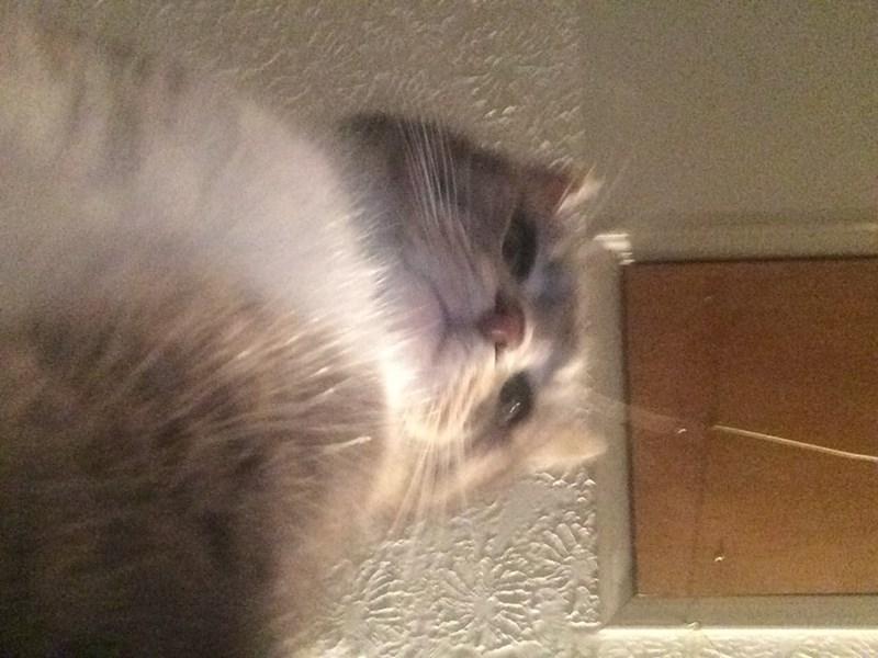 cat selfies - Cat