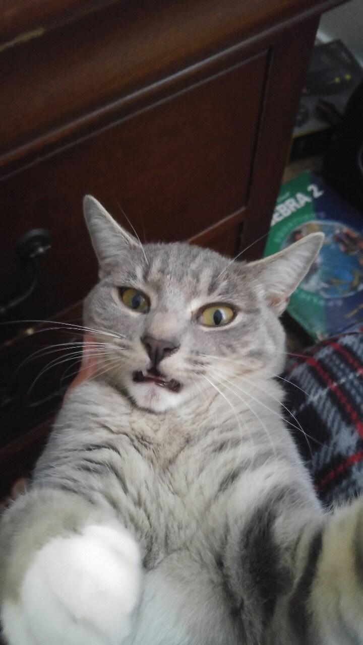 cat selfies - Cat - BRA 2